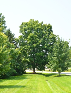 Tree at Entrance_002